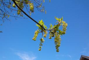 Spring Rising, April 2017